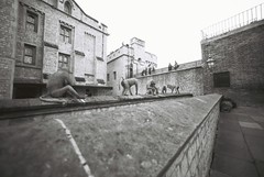 Animals (goodfella2459) Tags: nikonf4 afnikkor14mmf28dlens ilfordpanfplus50 35mm blackandwhite film analog london animals history buildings toweroflondon bwfp