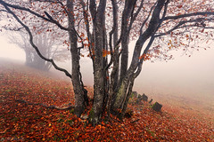 All red - Weissenstein (Captures.ch) Tags: aufnahme capture nebel fog morgen morning tag day autumn fall foliage herbst swiss schweiz solothurn weissenstein tree stone stein landschaft landscape buche forest gras beech