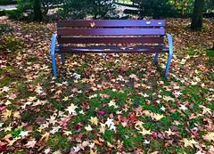 Colores de otoño (eitb.eus) Tags: eitbcom 16599 g1 tiemponaturaleza tiempon2019 otono gipuzkoa hondarribia josemariavega