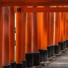 Fushimi torii (Tim Ravenscroft) Tags: torii fushimi vermilion path shrine shinto kyoto japan hasselblad hasselbladx1d