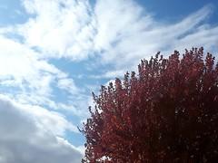 Fall sky (novice09) Tags: sky tree cellphone clouds ipiccy