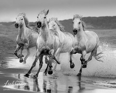 """Seaside Sprint • <a style=""""font-size:0.8em;"""" href=""""http://www.flickr.com/photos/106269596@N05/48942424517/"""" target=""""_blank"""">View on Flickr</a>"""
