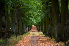 Way to Eternity (Oliver Zillich) Tags: way eternity cemetery berlin oliverzillich