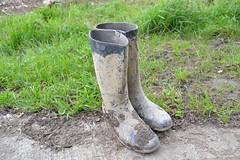 326 -- Dunlop hevea Ripped Wellies -- Bottes Hevea Dunlop trouées --  Gummistiefel Undicht -- Gescheurde laarzen (HeveaFan) Tags: rubberboots rubberlaazen 在泥里的靴子橡胶 kaplaarzen ゴム長靴 gummistiefel 威灵顿长靴 stiefel stivali stövlar ブーツ dunlop hevea aigle ripped wornout rainboots regenlaarzen wellies bottes wellworn caoutchouc galoshes wreckled trashed regenstiefel waterlaarzen soles tuinlaarzen loch leaky damaged trouée undicht versleten laarzen wellington kaput mud boue fertig riss gomma trou abgelatscht kaputt lek gumboots boots bottas vredesteinlaarzen vredesteinwellies vredesteinstiefel