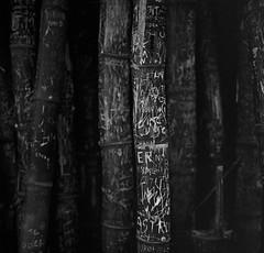 Guaduas te quiero guaduas (RoryO'Bryen) Tags: guaduas graffiti sierranevadadesantamarta anabasis noiretblanc roryobryen copyrightroryobryen colombia colombie bamboo writing escrituras rolleiflex rolleiflex28d magdalena coast kodaktrix analoguephotography analogue shadow shade caminos