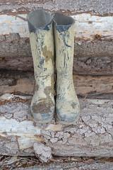 323 -- Dunlop hevea Ripped Wellies -- Bottes Hevea Dunlop trouées --  Gummistiefel Undicht -- Gescheurde laarzen (HeveaFan) Tags: rubberboots rubberlaazen 在泥里的靴子橡胶 kaplaarzen ゴム長靴 gummistiefel 威灵顿长靴 stiefel stivali stövlar ブーツ dunlop hevea aigle ripped wornout rainboots regenlaarzen wellies bottes wellworn caoutchouc galoshes wreckled trashed regenstiefel waterlaarzen soles tuinlaarzen loch leaky damaged trouée undicht versleten laarzen wellington kaput mud boue fertig riss gomma trou abgelatscht kaputt lek gumboots boots bottas vredesteinlaarzen vredesteinwellies vredesteinstiefel