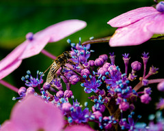 Photo of Bee on Flowers