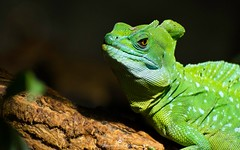 Grumpy (www.ownwayphotography.com) Tags: colorful portrait looking animal green