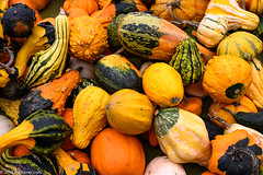 Nothing like a pile of gourds (none of which we bought) (Jim Frazier) Tags: 2019 abstract agricultural agriculture autumn background bunch carpet closeup colorfield curtain decorations desktop detail door doorcounty eggharbor fall falltableau farming farms fieldtrip flora fresh garden gardencenter gourds group jimfraziercom loadcode201910 many minimalism minimalist nature nursery october orange pile plants powerpoint produce q3 roadtrip several sizeover1000 study texture tosave vacation vegetables wall wallpaper warmtones wi wisconsin woodorchardmarket