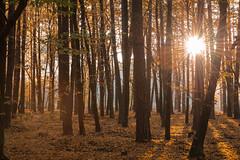 Poranek w lesie (puls*) Tags: autumn las jesień światło light