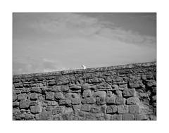 Today I am a lookout (Franco & Lia) Tags: lookout vedetta gabbiano seagull napoli naples campania casteldellovo biancoenero blackwhite noiretblanc schwarzundweiss minimalismo minimalism