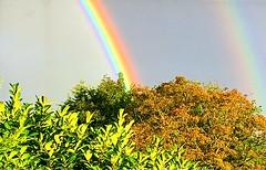 Double rainbow (BrooksieC) Tags: sky bow rainbow doublerainbow belfast ireland northernireland colour garden trees
