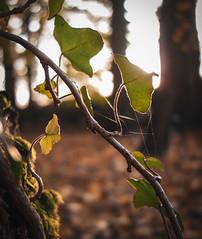Autumn in park (Patryk Rejdych) Tags: jesien autumn polska poland sony sonyrx100 nature park forest bokeh sunset sun