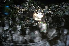 DSC_2991 (griecocathy) Tags: macro soleil bassin eau reflet bulle fleur jasmin mouvement végétations noir gris vert blanc bleu métalliser sombre lumineux