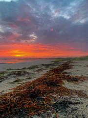 Terschelling (Anchye) Tags: beach water terschelling strand waddenzee waddeneiland sand noordzee loveholland lovethesea sunset zonsondergang rood