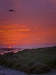 Terschelling (Anchye) Tags: terschelling waddeneiland strand water sand beach lovethesea loveholland waddenzee noordzee sunset zonsondergang avond