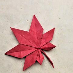 Maple Leaf - Seishi Kasumi (pierreyvesgallard) Tags: origami maple leaf seishi kasumi paper papercraft tree autumn
