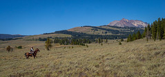 Yellowstone Idyll (kleiner_eisbaer_75) Tags: yellowstone nationalpark ritt panorama pano usa wyoming reiter pferd landscape landschaft natur nature