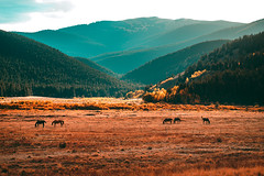 Welcome Home (miss.interpretations) Tags: openspace meadows prairie coloradobeauty coloradoranch horses pasture sunset mountains solitude beautifulplaces hermit canon6dmarkii rachelbrokawphotography