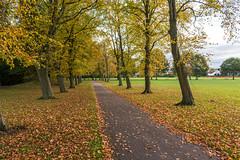 Autumn leaves (Philip Brookes) Tags: autumn colour tree leaf leaves park birkenhead wirral merseyside grass path