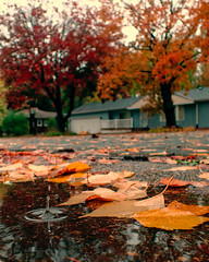 Fall rain fall (Thiophene_Guy) Tags: thiopheneguy originalworks olympustoughtg4 tg4 olympustg4 olympusstylustg4 rain rainyday lowperspective floorperspective groundperspective splash raindrop backjet autumn