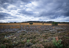 The Year 2019 in Picture -  295. dag (Poul Helt) Tags: marbæk lyng efterår autumn