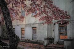 My Little Town 3  (Autumn) (buffdawgus) Tags: autumn 50mm nevadacity sierranevadafoothills canon5dmarkiii canon50mm18 lightroom6 topazstudio abandonedhospital california fall nevadacounty nevadacountyhospitalabandoned
