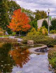 Adding some color on a cloudy day (tquist24) Tags: elkhart hdr indiana nikon nikond5300 outdoor wellfieldbotanicalgardens autumn clouds color colorful fall geotagged lamppost mapletree outside pond reflection reflections sky tree trees water waterfall
