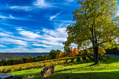 Fall Vineyard #2 (pa_cosgrove) Tags: canandaigua ny fall autumn foliage leaves trees vines grapes sky clouds landscape sunset sony a73