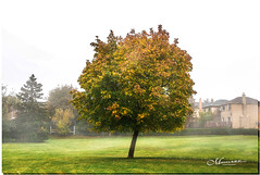 OCTOBER 2019 _976_NGM_3976-1-222 (2) (Nick and Karen Munroe) Tags: fog foggy goldenlight gold orange yellow cool flora november outside landscape landscapes dawn sunrise morning daybreak tree trees fall autumn fallsplendor fallcolours karenick23 karenick karenandnickmunroe karenandnick munroe karenmunroe karen nickandkaren nickandkarenmunroe nick nickmunroe munroenick munroedesigns photography munroephotoghrpahy munroedesignsphotography nature brampton bramptonontario ontario ontariocanada outdoors canada d750 nikond750 nikon nikon2470f28 2470 2470f28 nikon2470 nikonf28 f28 colour colours color colors