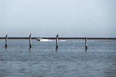 Chrisfield Speedboat (Ian David Blüm) Tags: crisfield maryland eastern shore smith island pier posts sea birds speedboat boat chesapeake bay cormorant pelican