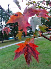 Autumn Leaves. (dccradio) Tags: lumberton nc northcarolina robesoncounty tuesday morning tuesdaymorning goodmorning samsung galaxy smj727v j7v cellphone cellphonepicture outdoors outdoor outside nature natural tree trees branch treebranch treebranches branches trail walkingtrail northeastpark raymondbpenningtonathleticcomplex penningtonathleticcomplex park citypark leaf leaves foliage autumn fall cloudy overcast grass lawn greenery yard ground