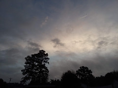 Overcast Morning. (dccradio) Tags: lumberton nc northcarolina robesoncounty tuesday morning tuesdaymorning goodmorning samsung galaxy smj727v j7v cellphone cellphonepicture outdoors outdoor outside nature natural tree trees branch treebranch treebranches branches wilcoxauto wilcoxautomotive hazy overcast clouds stormclouds silhouette cloudy