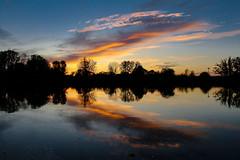 October Double Down (amillionwalks) Tags: october 2019 beavers cormorants water sunset trail climbdowntoriver grandriver brantford sky brantpark reflections double trees vacanyospreynest