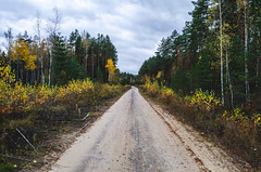 Dirt road for the cars which transport the cut trees. (ivan_volchek) Tags: autumn autumnforest autumnlandscape beautiful brown cloud cloudy country curve dirt dirtroad environment fall fir foliage footpath forest green horizontal landscape leaves light natural nature nobody october orange outdoor park path road russianforest russiannature scenic season seasonal sky stem straight through travel tree way yellow yellowandgreen yellowtrees
