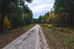 The road on which the timber is transported for sawing. (ivan_volchek) Tags: autumn autumnforest autumnlandscape beautiful brown cloud cloudy country curve dirt dirtroad environment fall fir foliage footpath forest green horizontal landscape leaves light natural nature nobody october orange outdoor park path road russianforest russiannature scenic season seasonal sky stem straight through travel tree way yellow yellowandgreen yellowtrees