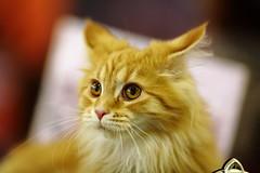 kitten (Сonstantine) Tags: catslife kitten kittens animals photo