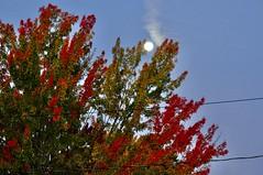 Sunrise spotlighting moonset (Jerry Godwin) Tags: sunrise moonset foliage maple
