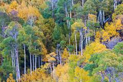 Transition (Jaykhuang) Tags: fallcolors autumn southlake northlake lakesabrina jayhuangphotography longlens aspens bishop bishopcreekcanyon easternsierra 395 highway395