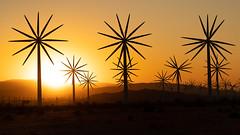 Palm Springs Windmills (mangoldm) Tags: sunrise windmills palm springs windmill
