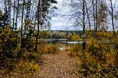 Autumn weather on the lake. (ivan_volchek) Tags: autumn beautiful cloudy cold country countryside environment fall field forest grass green horizon landscape leaf leaves meadow misty natural nature october orange outdoor outdoors park path pine plant road rural season seasonal sky summer tree trees trunk weather wild wood woodland woods