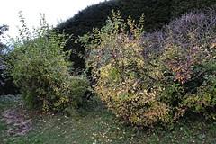 _DSF3770_DxO (Alexandre Dolique) Tags: fuji xt3 fujifilm 1855 la relatière belledonne saint martin duriage