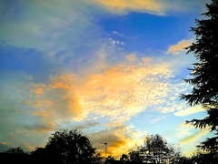 Sunset (daveandlyn1) Tags: cloudysky sunset lovelycolours folige bushes leaves pralx1 p8lite2017 huaweip8 smartphone psdigitalcamera cameraphone
