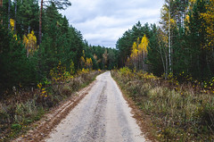 Walk on the road going through the forest. (ivan_volchek) Tags: autumn autumnforest autumnlandscape beautiful brown cloud cloudy country curve dirt dirtroad environment fall fir foliage footpath forest green horizontal landscape leaves light natural nature nobody october orange outdoor park path road russianforest russiannature scenic season seasonal sky stem straight through travel tree way yellow yellowandgreen yellowtrees