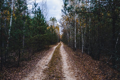 Dirt road through a beautiful forest in autumn. (ivan_volchek) Tags: adventure amazing aspen autumn beauty country countryside dirt fall foliage forest golden grass green idyllic landscape leaves natural nature outdoors park path road rural russia scenery scenic season sky stunning track trail travel tree trees views winding wood woods yellow