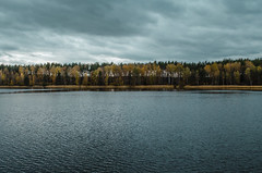 The lake is surrounded by forest in late autumn on a cloudy day. (ivan_volchek) Tags: autumn beautiful cloudy cold country countryside environment fall field forest grass green horizon lake landscape leaf leaves meadow misty natural nature october orange outdoor outdoors park path pine plant reflection river road rural season seasonal sky summer tree trees trunk water weather wild wood woodland woods