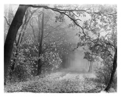My playground / Moje podwórko (Piotr Skiba) Tags: road autumn bw monochrome leaves siemianowice śląskie bażantarnia film fog landscape poland intrepid 4x5 pl fomapan400 piotrskiba trees mist forest branch