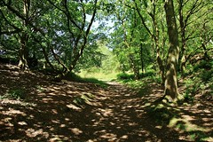 A walk in the woods (Eddie Crutchley) Tags: europe england cheshire outdoor nature woodland trees sunlight shadows beauty simplysuperb