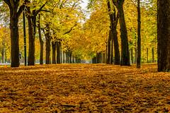 Autumn in the main avenue in the Vienna Prater (a7m2) Tags: vienna prater mainavenue praterstern lusthaus riesenrad augarten leopoldstadt travel tourismus joggen laufen run hiking radfahren
