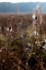 Enjoy the moment (Patricia Buddelflink) Tags: spiderweb morning dew nature art